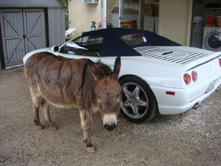 10th commandment - do not covet your neighbour's  donkey and a Ferrrari